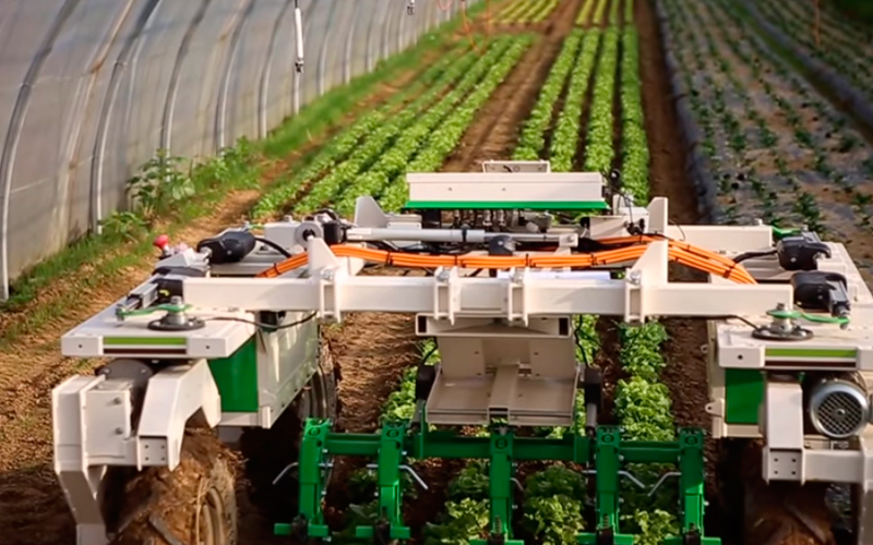 DINO: the world's first row-straddling weeding robot to reach the market