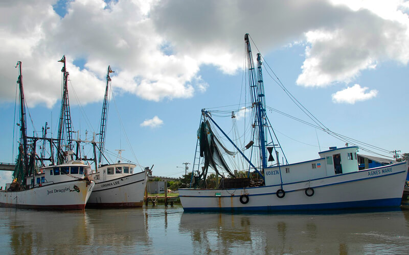 FAO seeks to help boost shrimp and groundfish numbers in the Caribbean